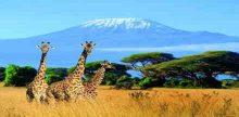 Radio Kilimanjaro Moshi