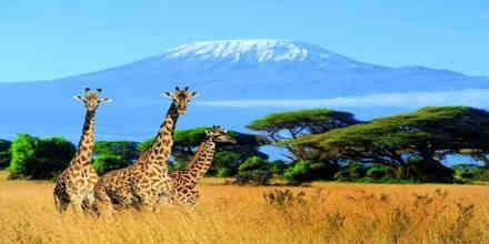 Radio Kilimanjaro Online 255