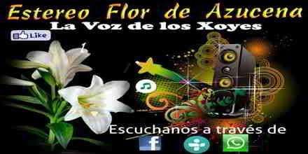 Estereo Flor de Azucena HD